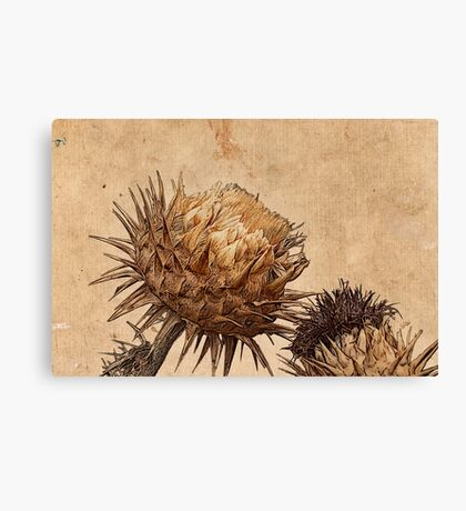 The Old Grey Thistle Test Canvas Print