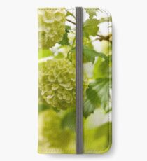 Viburnum opulus Roseum flowers iPhone Wallet/Case/Skin