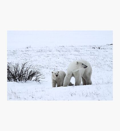 Polar Bear Mother & Cub in the Tundra Photographic Print