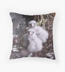 Baby peregrine falcons  Throw Pillow