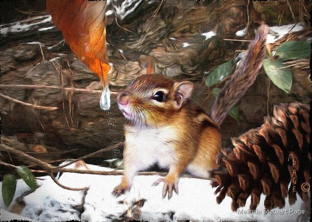 """""""Curious Chipmunk"""" by Melinda Stewart Page"""