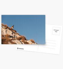 Sunbather Postcards