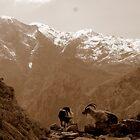 In den Bergen von WillBov