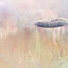 Lonely Mushroom by Bob Daalder