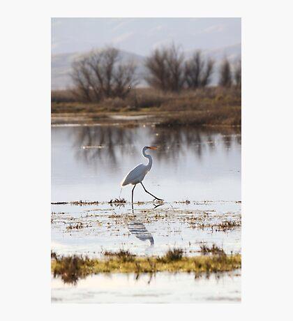 Walk like an Egret Photographic Print