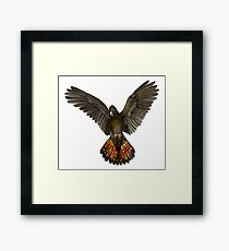 Forest Red-tailed Black Cockatoo (Karrak) Framed Print