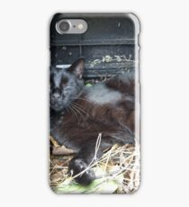 Cat in the compost bin iPhone Case/Skin