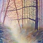 Forest of Light by Glenn Marshall
