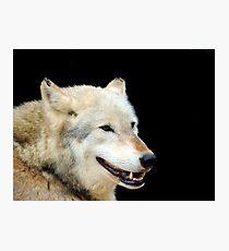 Timber Wolf 2 Photographic Print
