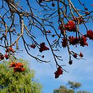 Kings Park, Perth, Western Australia. by johnrf