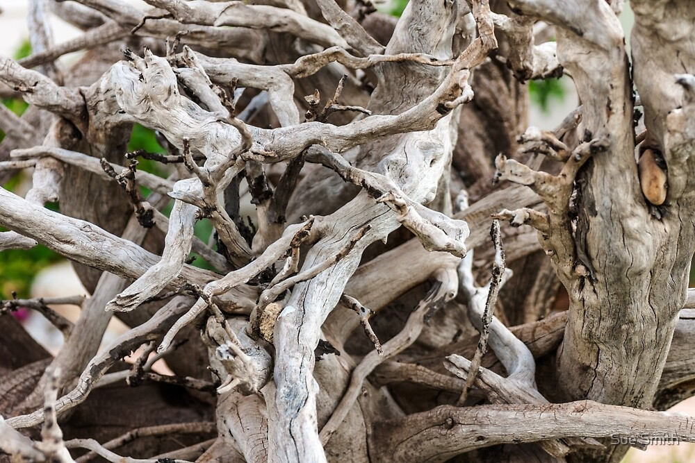 Driftwood Close-Up by Sue Smith