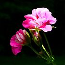 Geranium for Mary by Lori Epperson