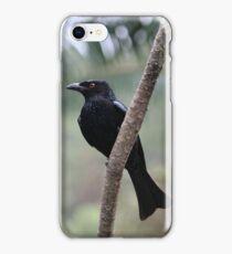 Spangled Drongo iPhone Case/Skin