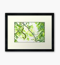 A Curly One Framed Print