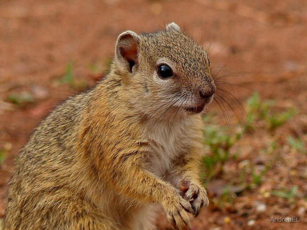 Did I Forget Something? - Squirrel - SA by AndreaEL