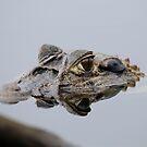 Black Caiman  - Alligator  -  Anuungi Lake - Rio Napo Ecuador by john  Lenagan