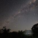 Starlight by Alyssa Passlow