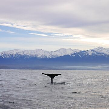 Sperm Whale on the Kaikoura Coast Line by E-McAleavey