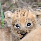 Infant lion cub(mommy what is the big thing looking at us?) by Anthony Goldman