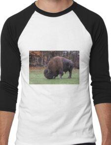 American Field Buffalo grazing Men's Baseball ¾ T-Shirt