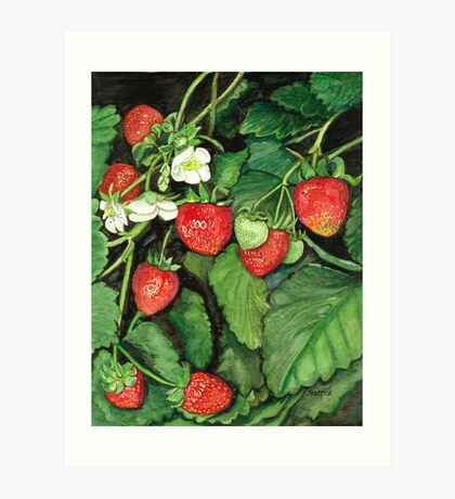 Strawberries - Fresh and Ready to Harvest Art Print