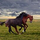 wild horses by lucyliu