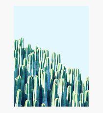 Cactus by the Sea #redbubble #decor  Photographic Print