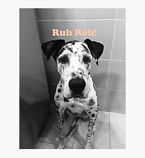 Ruh Roh! - Great Dane Photographic Print