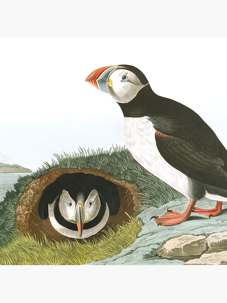 Atlantic Puffin - John James Audubon by billythekidtees