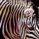 Zebra by rah-bop