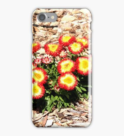 Mt Annan Daisies iPhone Case/Skin