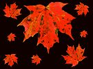 Oh, Canada - Red and Black by MotherNature