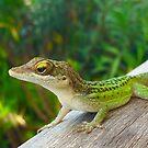 Green Lizard by Christine  Wilson