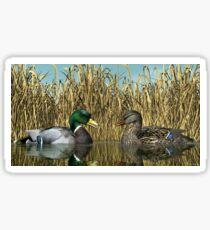 Male and Female Mallard Ducks Sticker