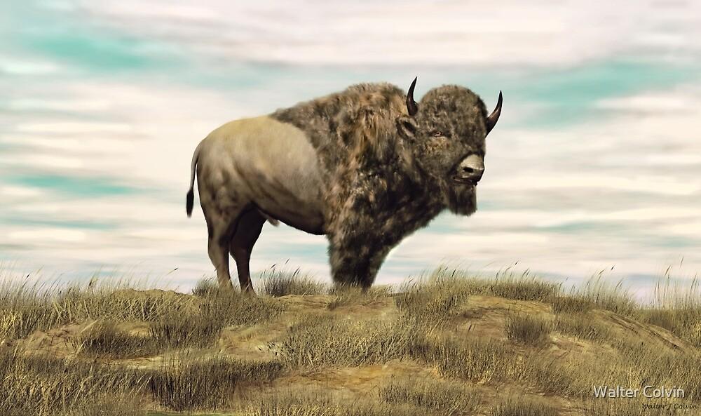 Buffalo Hill by Walter Colvin