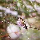 Kolibri im Schnee von Peggy Collins