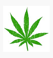 Marijuana Leaf Photographic Print