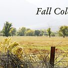 Fall Colors by The Photography of David Winge