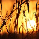 Sunset in the African bushveld by Anthony Goldman