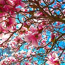 Magnolias to the sky by MarianBendeth