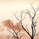 Bare Limbs by denise romano