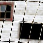 Wire by Diane Arndt