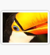 Detailed Portrait of a Toco Toucan at Iguassu, Brazil.  Sticker