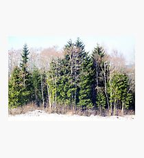 Evergreen and Deciduous Photographic Print