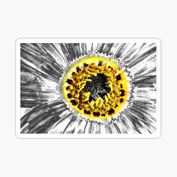 Metalised Gazania Sticker