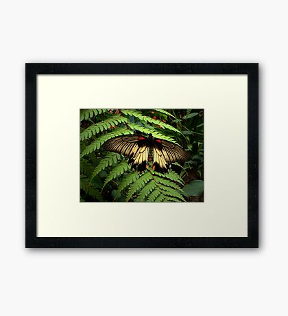 Butterfly and Fern Framed Print