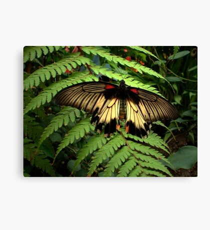 Butterfly and Fern Canvas Print