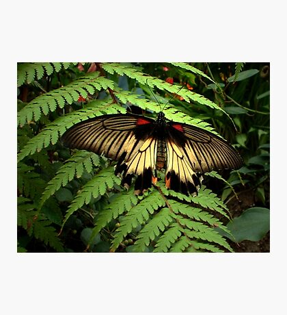 Butterfly and Fern Photographic Print