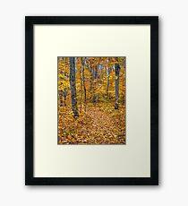 Golden Fall Colour Framed Print