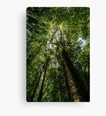 Rainforest Giants Canvas Print